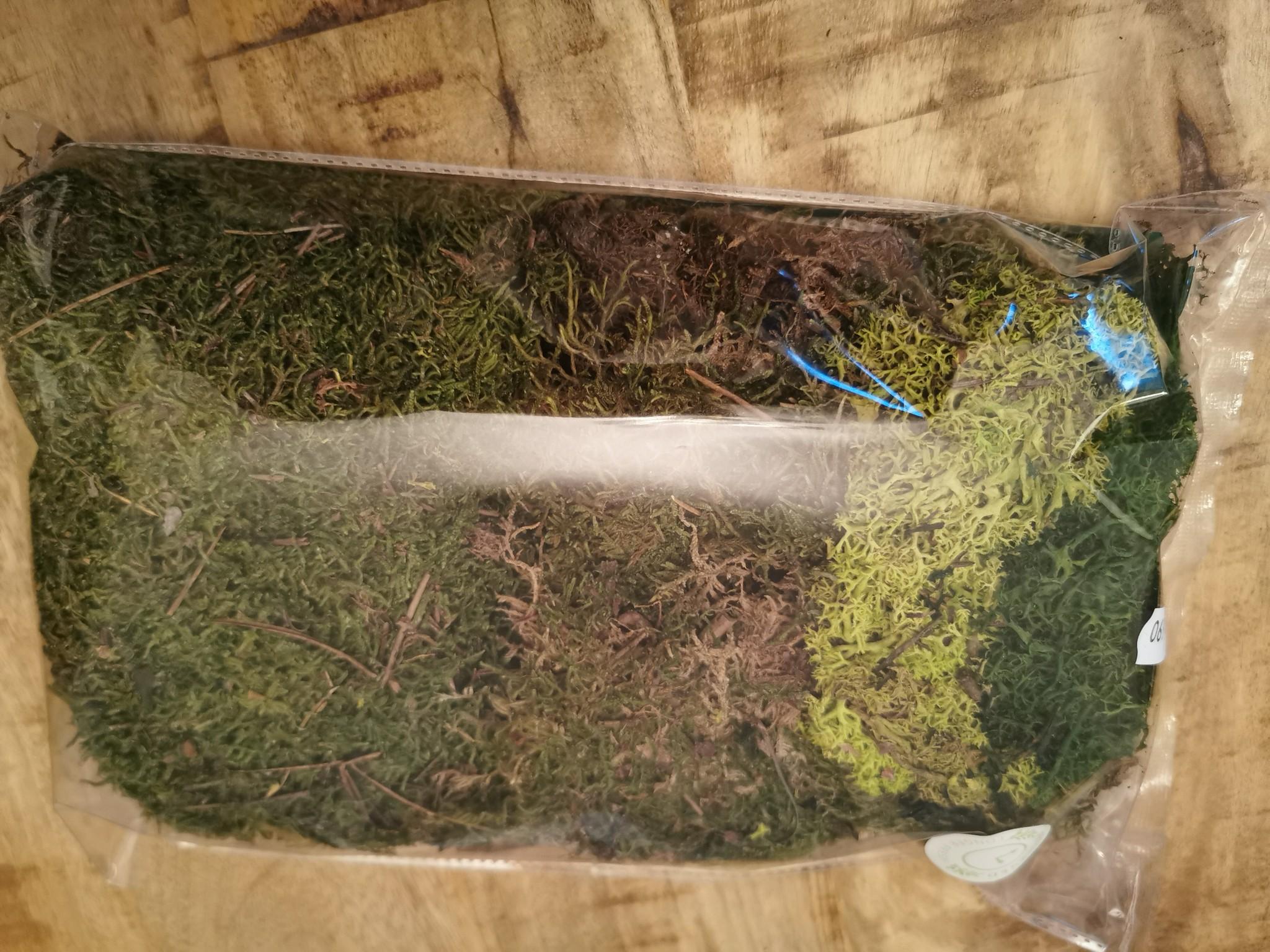Moos - gepresst 3 Sorten grün