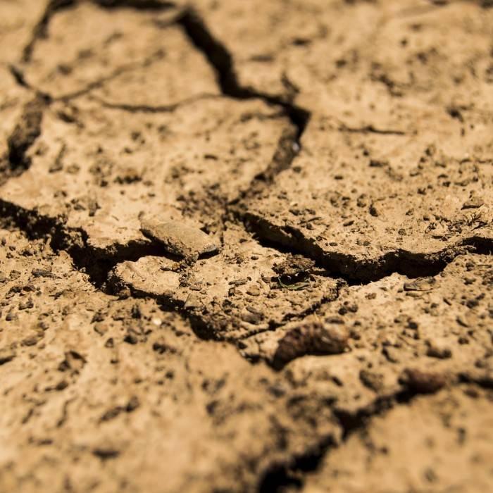 Potting Soil 6