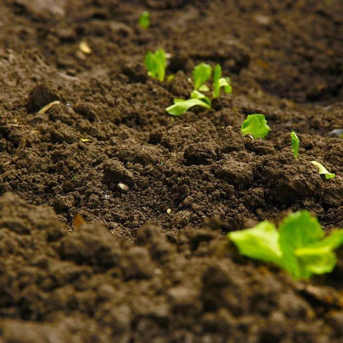 Potting Soil 7