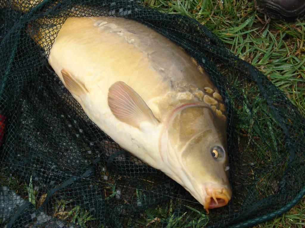 New & used carp fishing tackle