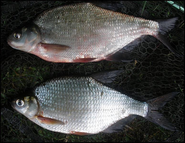 Coarse & match fishing tackle