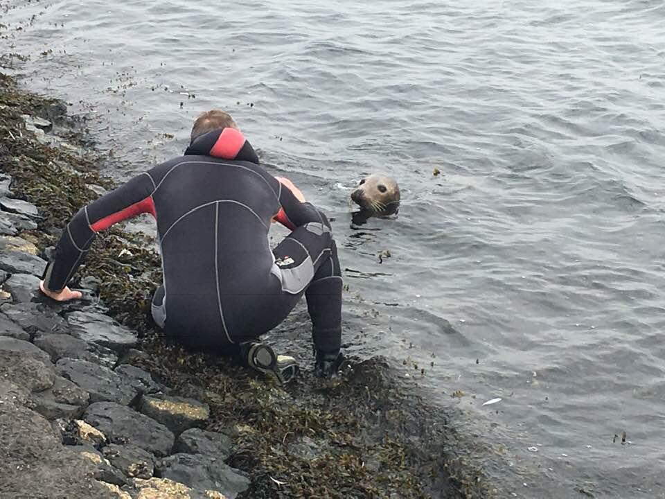 duiker zeehond Zeeland