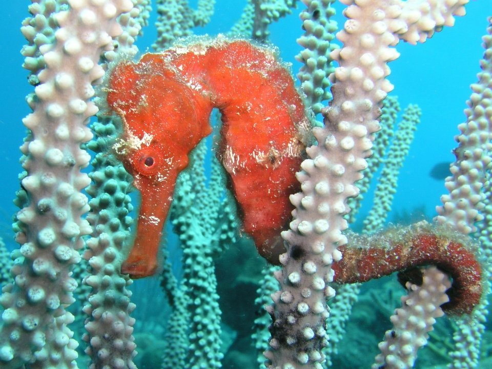 Tips voor duiken op Bonaire