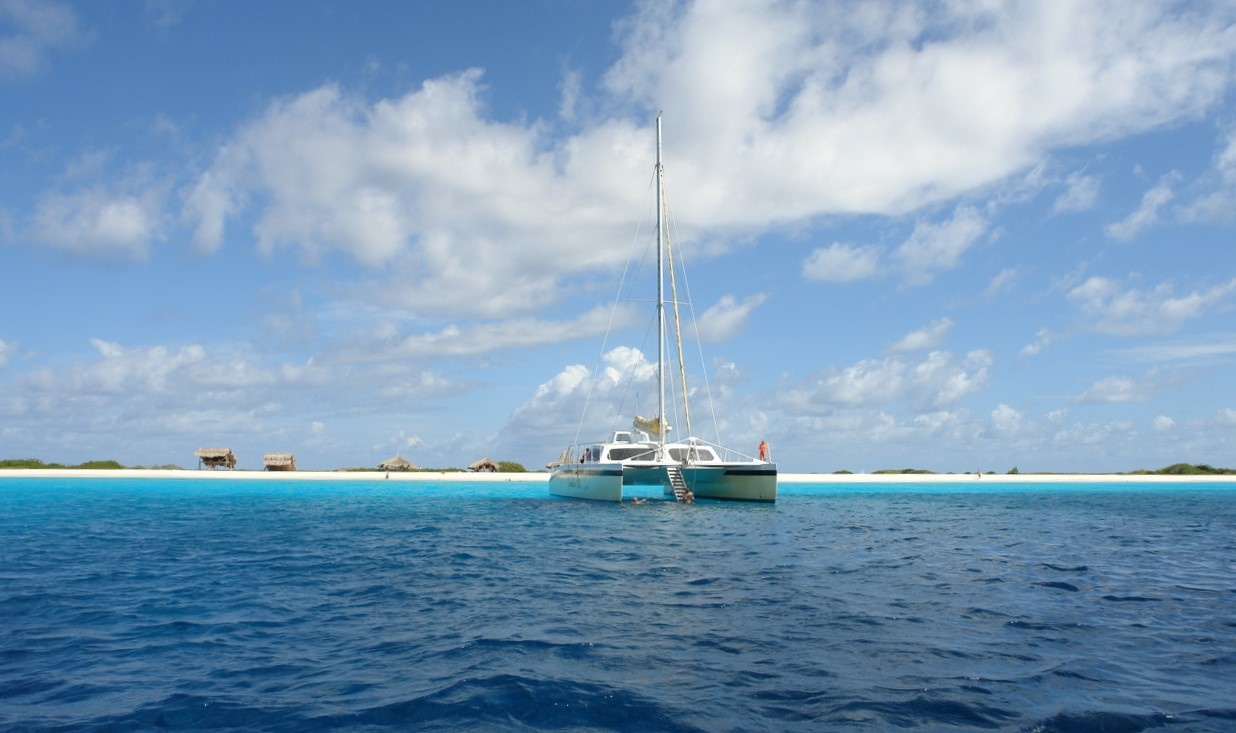 Vijf kantduiken op Curaçao