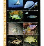 Fish ID card Caribbean