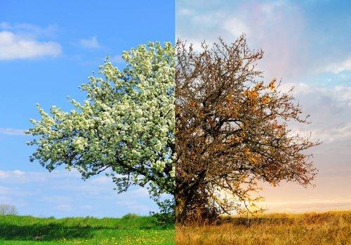 Frühling und Herbstfutter