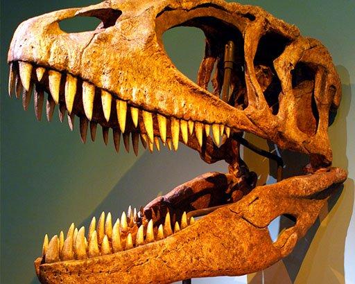 Afrikaanse dinosauriërs