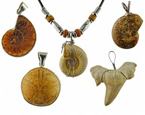 Fossil hangers