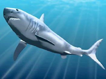 Impressie megalodon haai