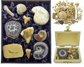 Fossils sets