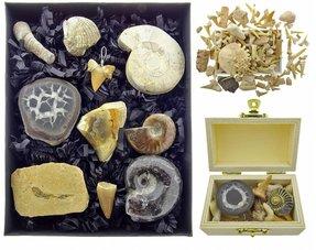 Fossielen sets