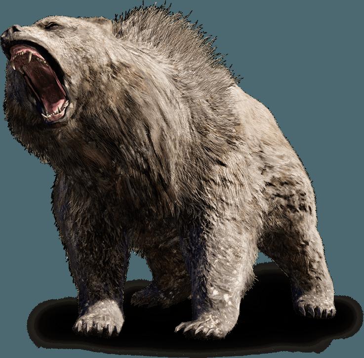 Tanden en klauwen van de holenbeer | De Barnsteen Specialist