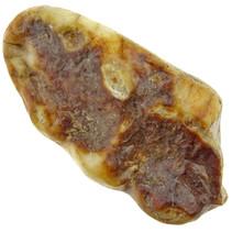 Cave bear molar