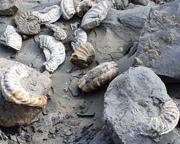 Zelf fossielen zoeken