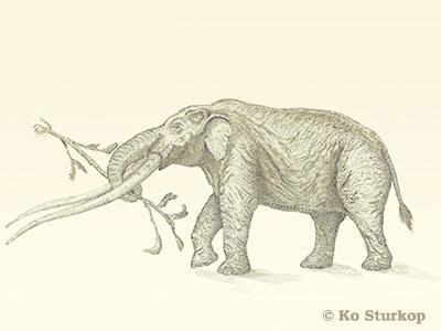 Auvergne mastodont