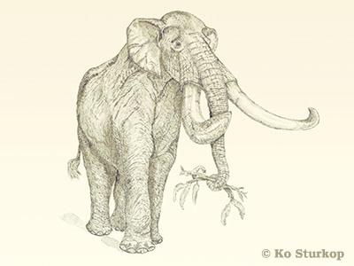 Zuidelijke mammoet