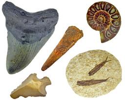 Top 10 cadeau ideeën voor de fossielen verzamelaar