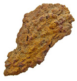 Fossilized poop
