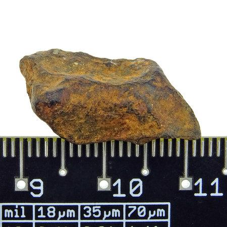 Iron meteorite from the Atlas Mountains