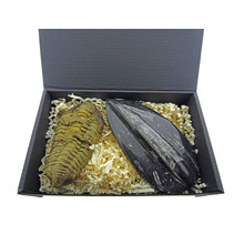 Gift box with orthoceras and trilobite