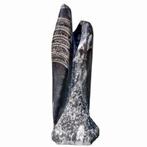 Orthoceras staander 23 cm