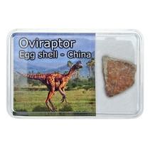 Oviraptor eierschaal