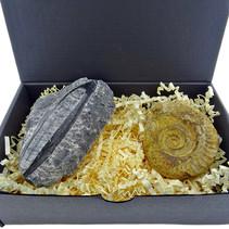 Giftbox met orthoceras en ammoniet