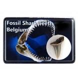 Fossiele haaientand in doosje