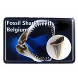 Fossil shark tooth in collectorsbox