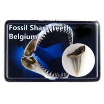 Shark Tooth in box