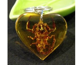 How to recognize counterfeits in amber? Plus authenticity test!