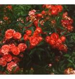 Orange Morsdag