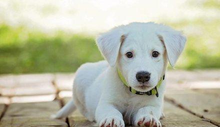 Verzorging voor honden en pups
