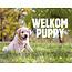 Ecostyle Puppy pakket