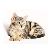 Verzorging voor katten en kittens