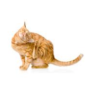 Vlooien & teken bij katten en omgeving