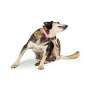 Vlooien & teken bij honden en omgeving