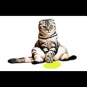 Kattenpis geur verwijderen