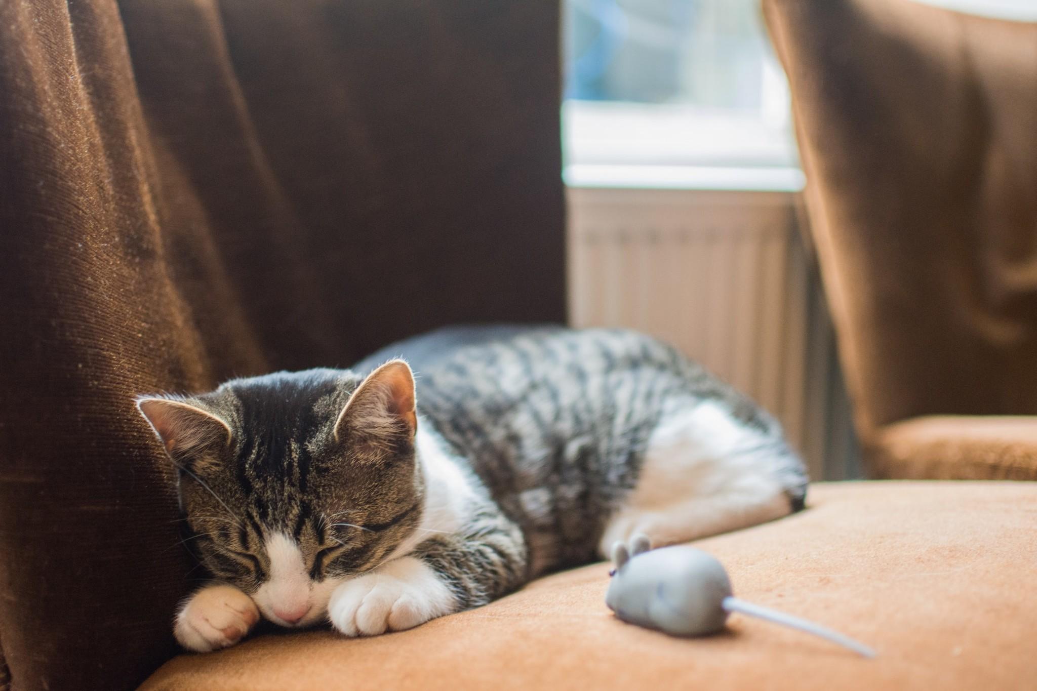 Blaasgruis herkennen bij een kat