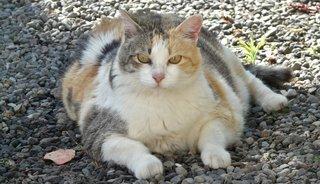 Is jouw kat te zwaar? Ontdek wat jij kunt doen voor een gezond gewicht!