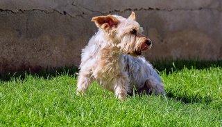 Is senior hondenvoer noodzakelijk voor de hond?