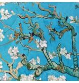 Punta di Roma 2232 - Van Gogh / Mandelblüte