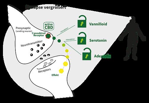 Active CBD - Breathe Organics