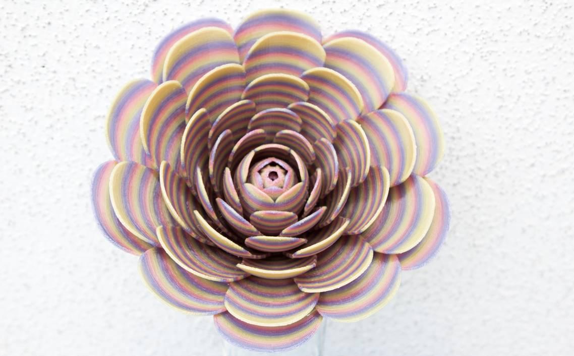 Rose Regenbogen pastell