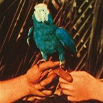 ANDREW BIRD - ARE YOU SERIOUS (2 CD DELUXE)