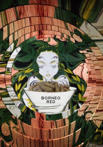 Borneo red Kapseln