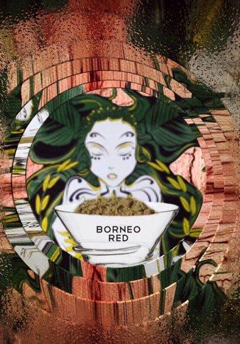 Bornean red vein