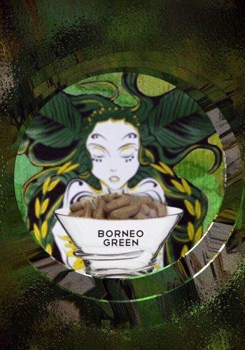Borneo green  Kapseln