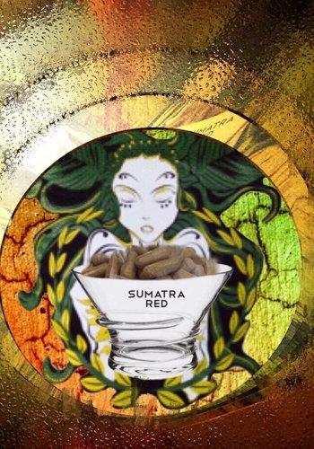 Sumatra red  Kapseln