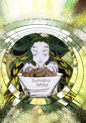 Sumatra white  vein   Kapseln